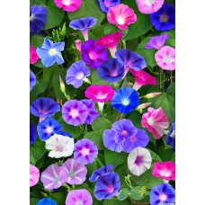 Morning Glory Large Cutter and Veiner Set