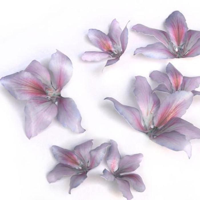 Wafer Paper Edible Precut Flowers Purple Bauhinia (16 Pieces)