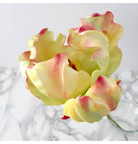 Sugar Flower Parrot Tulip with Sweet Savour by Felicia May 10th 10 till 2PM