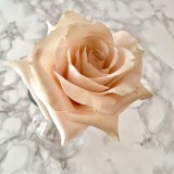Sugar Flower Quicksand Rose with Sweet Savour by Felicia March 3rd 10 till 1PM